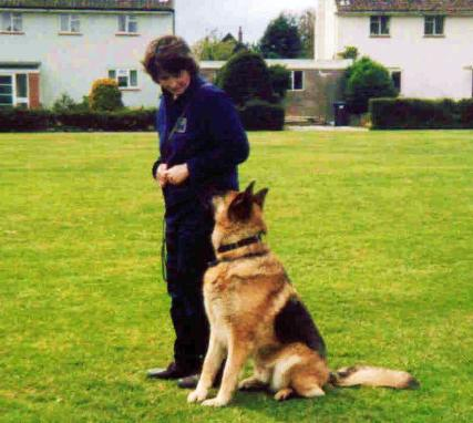 Fun Practical Dog training and behavioural help for cats